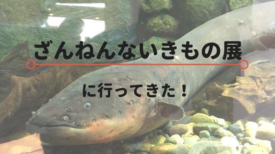 サンシャイン水族館特別展『ざんねんないきもの展』レビュー!画像と共に行ってきた感想を綴る!