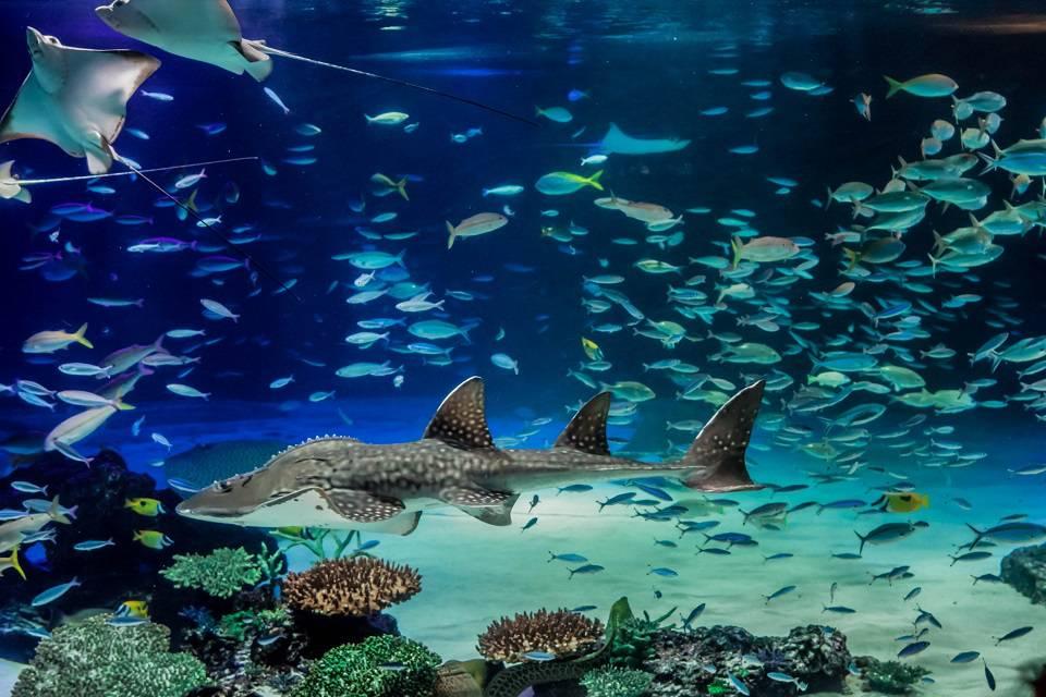 【孤独を楽しむ】お一人様を満喫した全アクティビティのリアルな感想と難易度│一人水族館